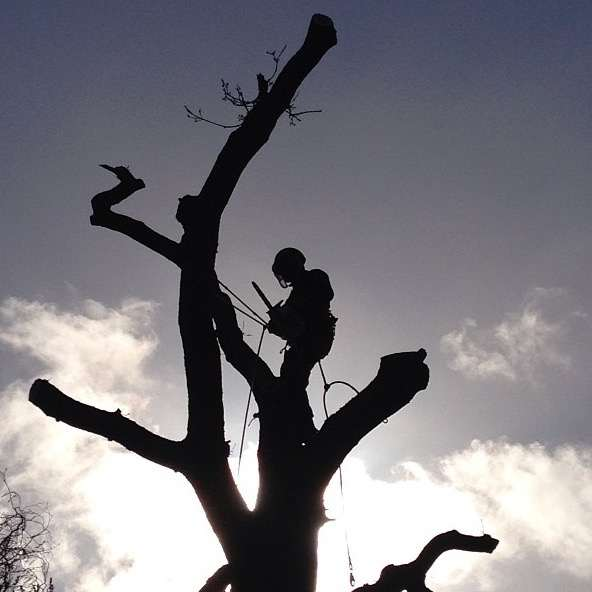 image showing Tree surgeon silhouetted against the sky